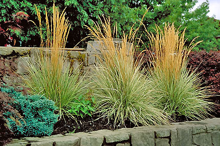 karl forester grass, winnipeg garden centers, perennials on sale
