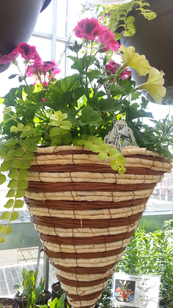 hanging baskets, greenhouse, annals, conebaskets, jensen nursery and garden center, winnipeg