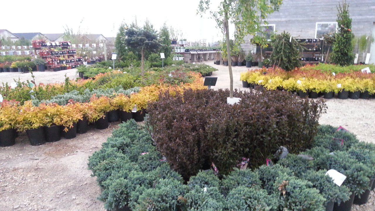 shrubs, trees, evergreens, five year plant warranty, jensen nursery and garden centre, winnipeg garden centres, winnipeg