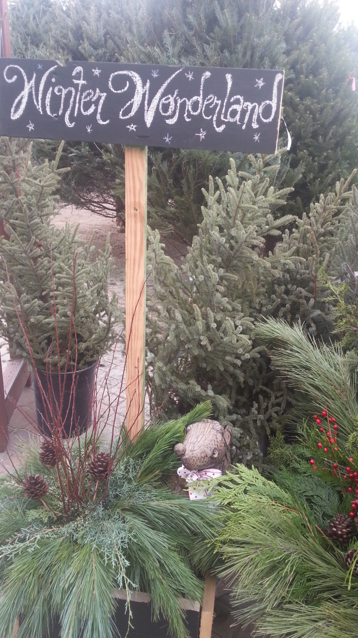 winter wonderland, christmas trees, greens, christmas shop, winnpeg
