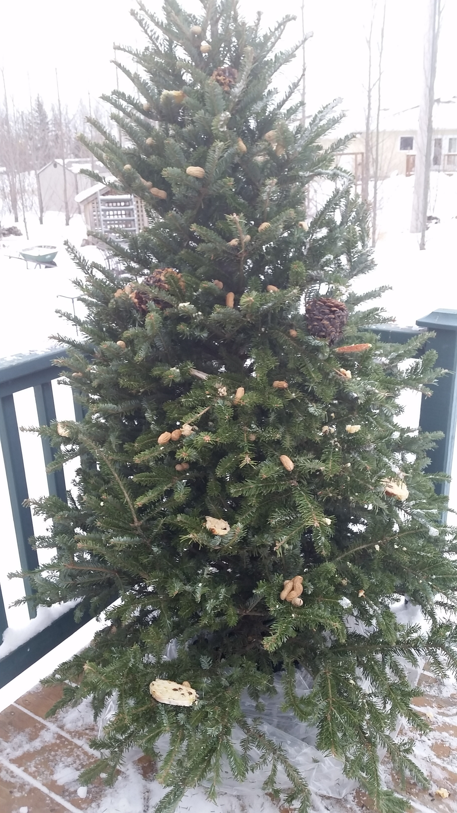 christmas tree, bird feeders, feed the birds, jensen nursery