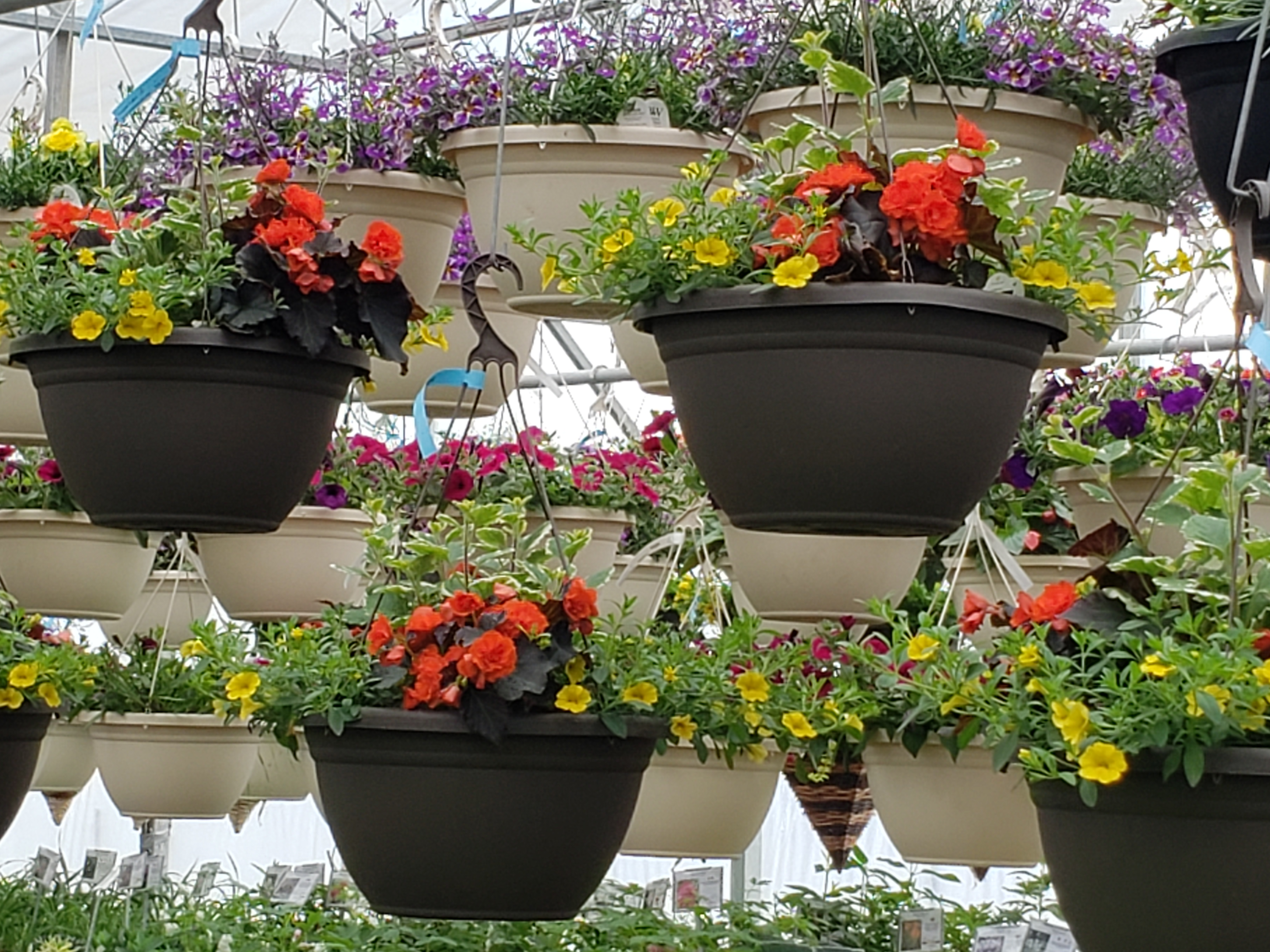 hanging baskets, winnipeg greenhouse, mothers day flowers, mothers day gifts