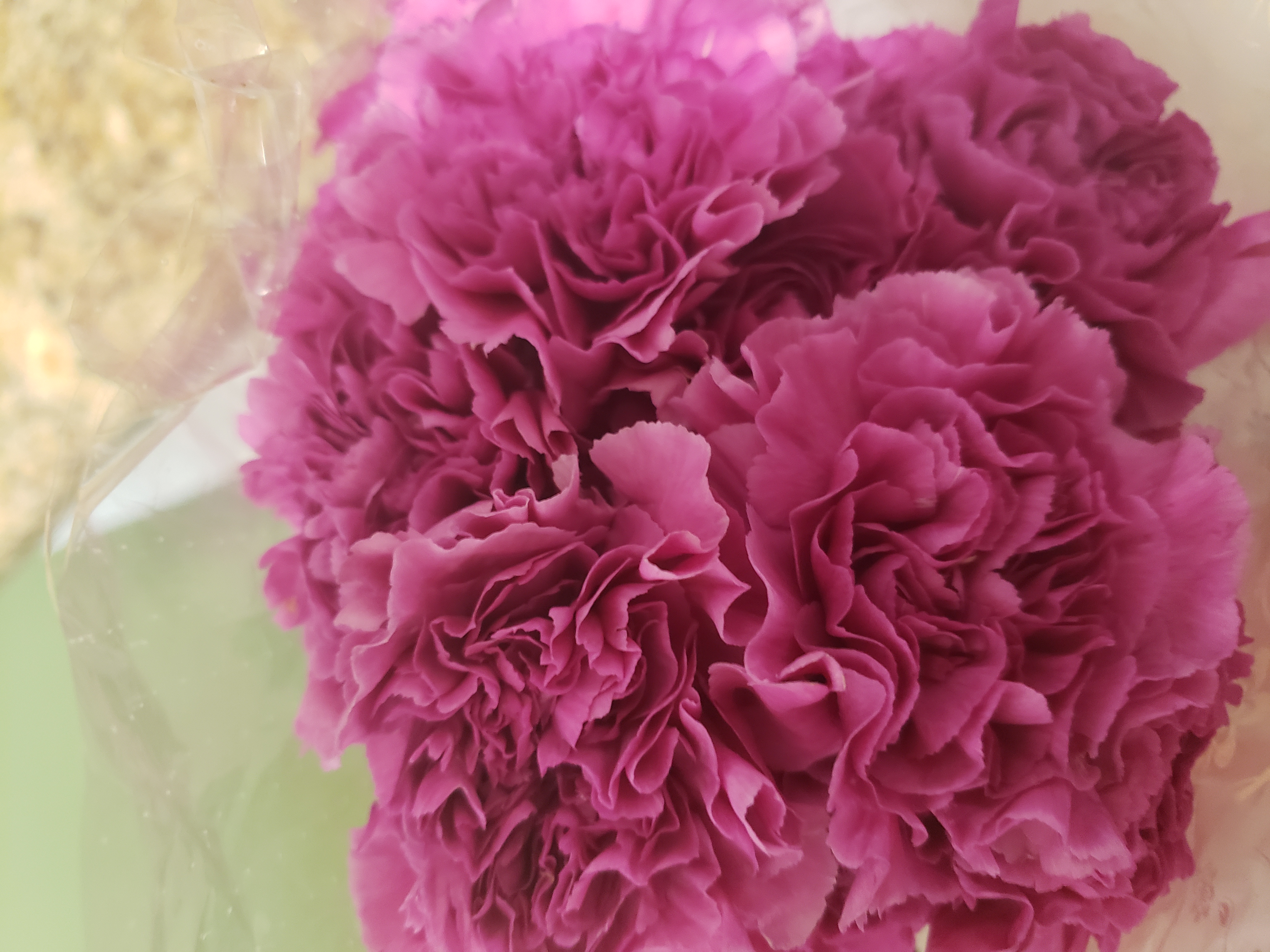 cut flowers, carnations