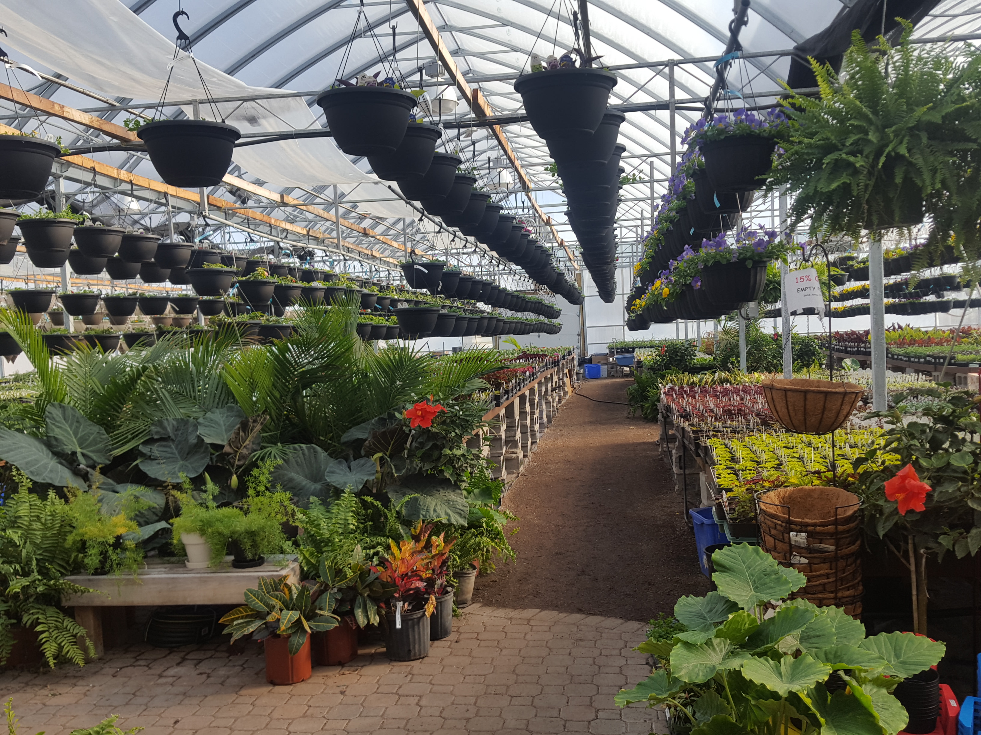 greenhouse, flowers, annuals, tropicals, succulents, hanging baskets