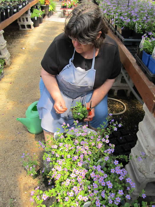 Mrs Jensen, Planting Annuals - Jensen's Nursery and Garden Centre - Garden Center - Winnipeg - Manitoba
