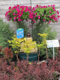 5 Year Warranty on Shrubs and Trees - Jensen's Nursery and Garden Centre - Garden Center - Winnipeg - Manitoba
