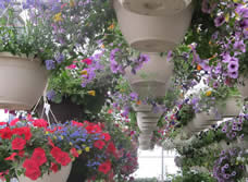 hanging baskets, greenhouse, Jensen Nursery and Garden Center, Winnipeg, manitoba